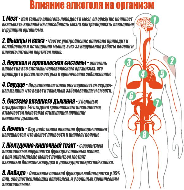 Как действуют запои на организм