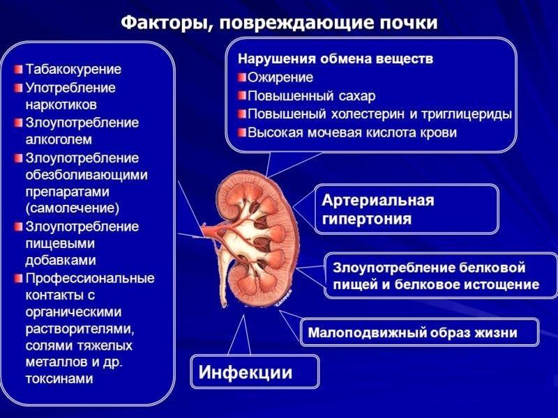 Факторы, повреждающие почки