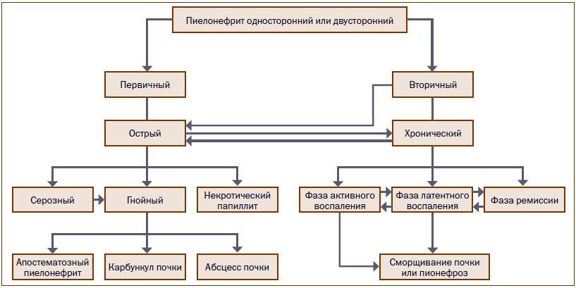 Виды пиелонефрита