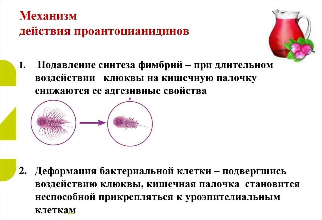 Действие проантоцианидов
